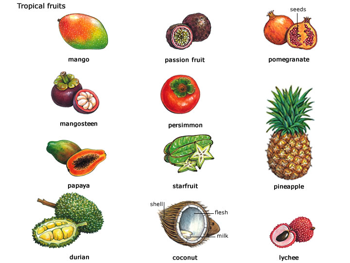 Rare Fruits Name List Pictures to Pin on Pinterest - PinsDaddy
